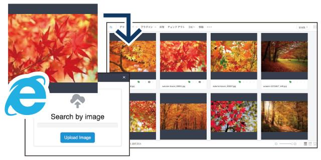 WebからDAMへの画像検索